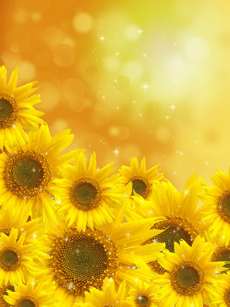 Sunflowers On Blurred Background