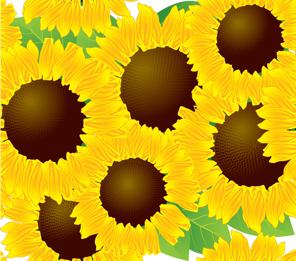 Sunflowers Seamless Background. Vector Background