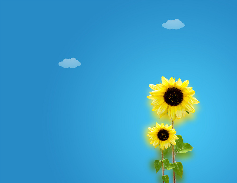 Sunny Day - Sunflowers Background