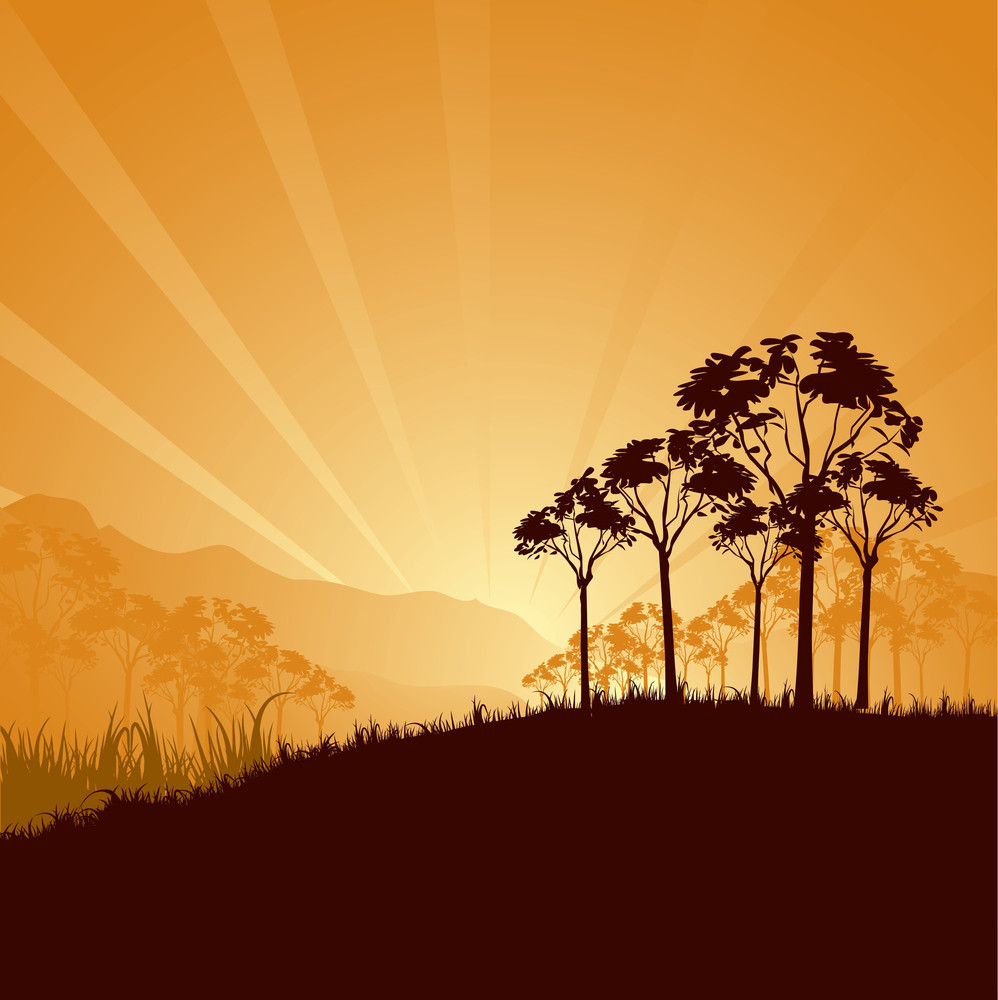 Sunrise In Savanna
