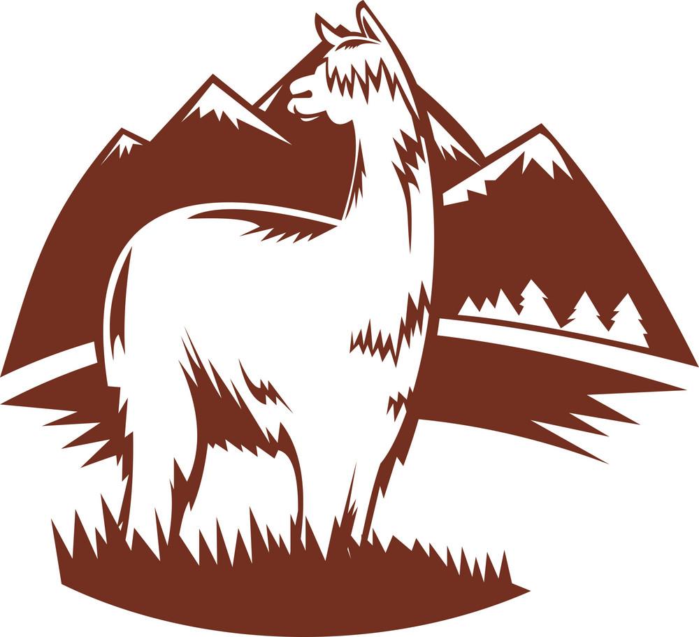 Suri Alpaca With Mountains