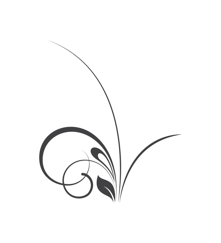 Swirl Organic Nature Element