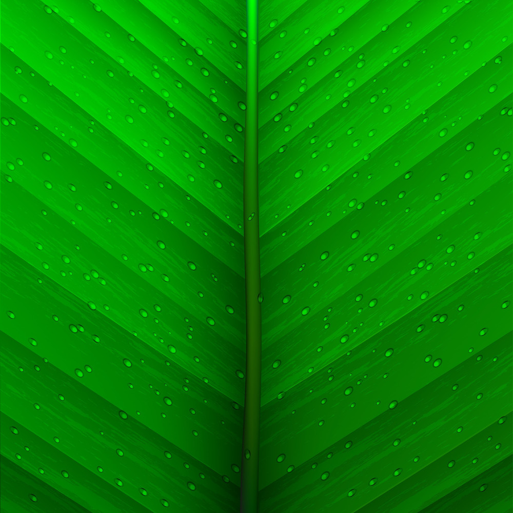 Texture Leaf And Drops