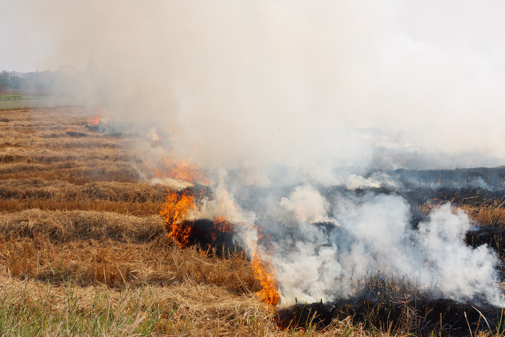 The Dry Grass In The Field Burns Inflated