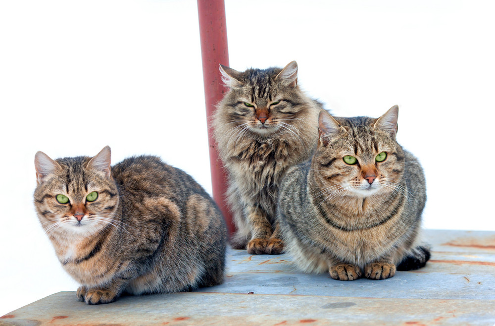 Three cats sit on a table