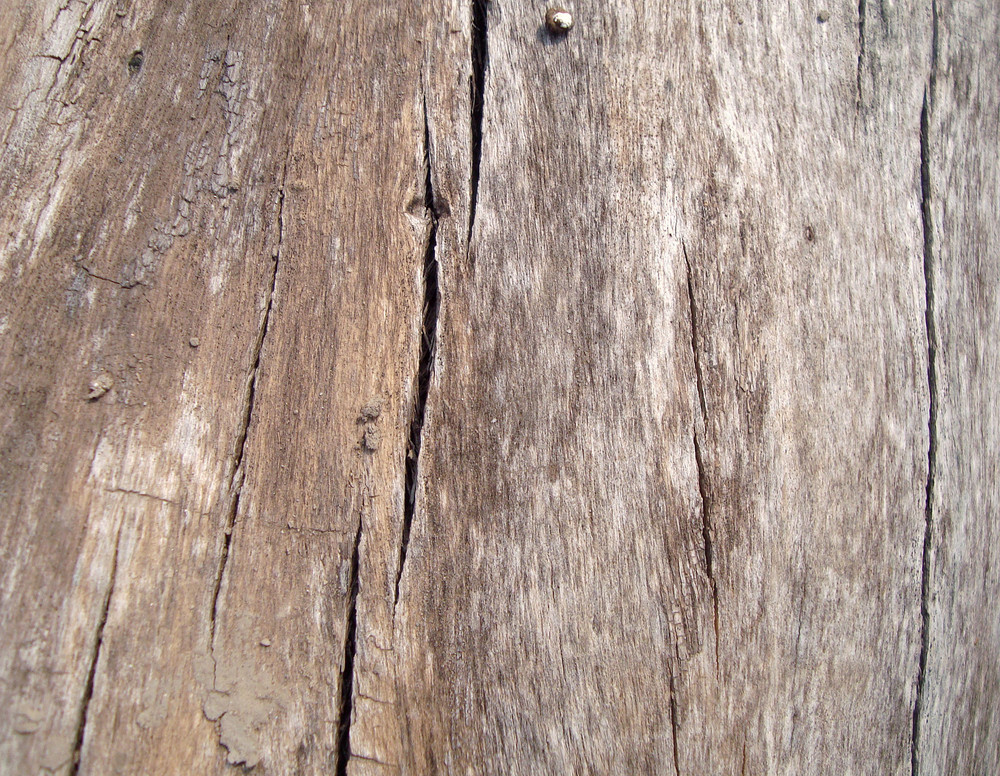 Timber_texture_background