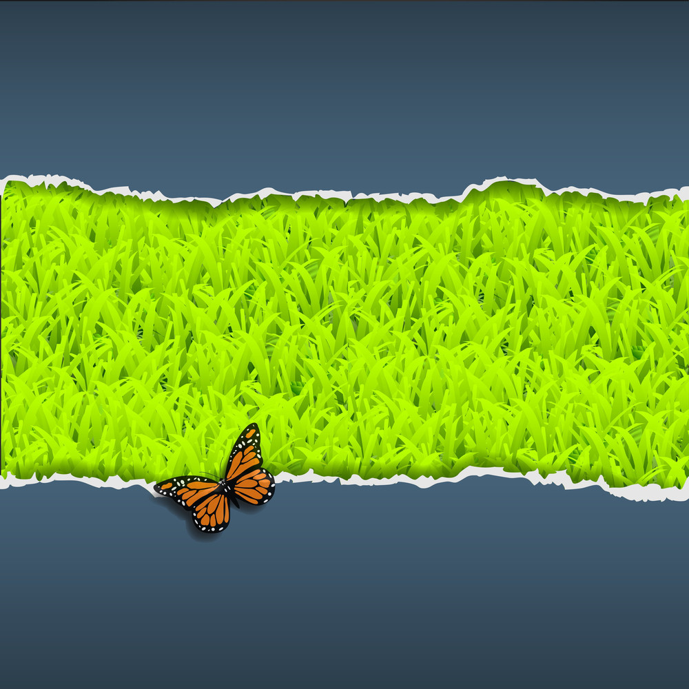 Torn Paper With Grass And Butterfly