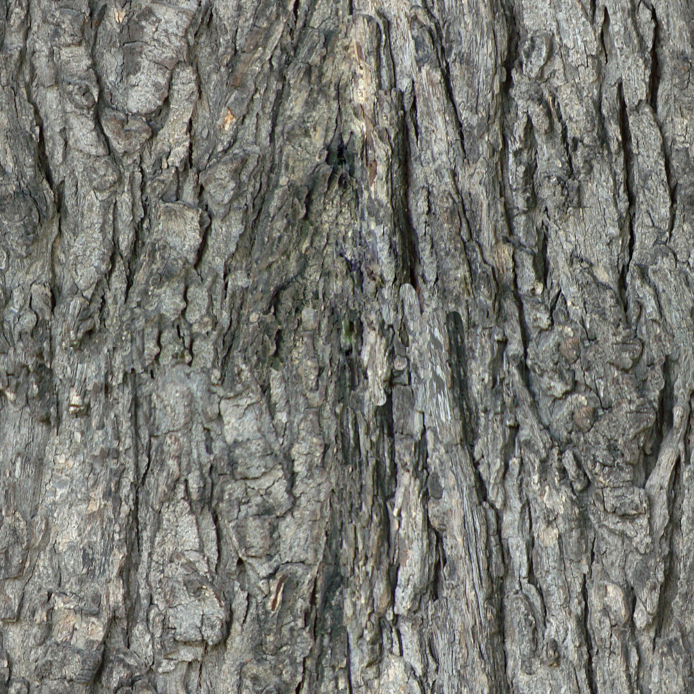 Tree-bark  Seamless Texture