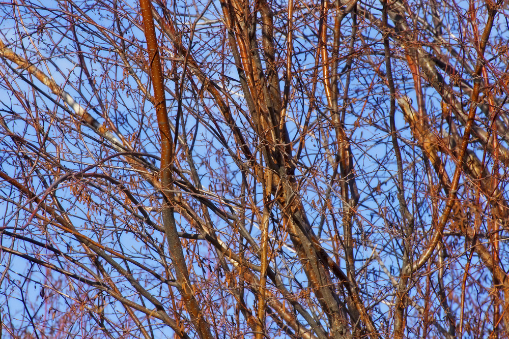 Tree Branches Texture 5