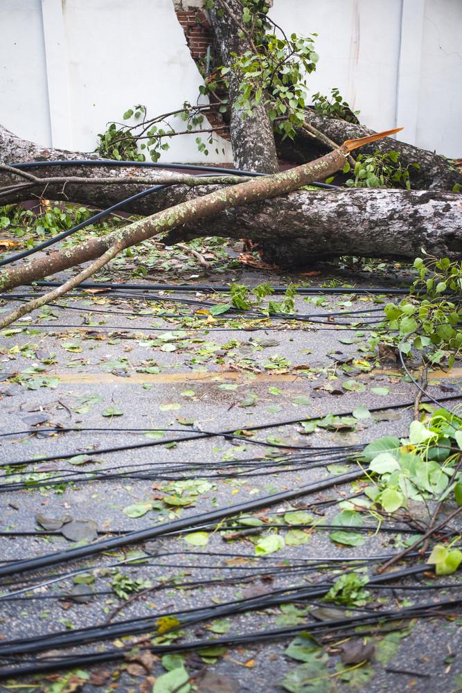 Tree Down in Wind Damage