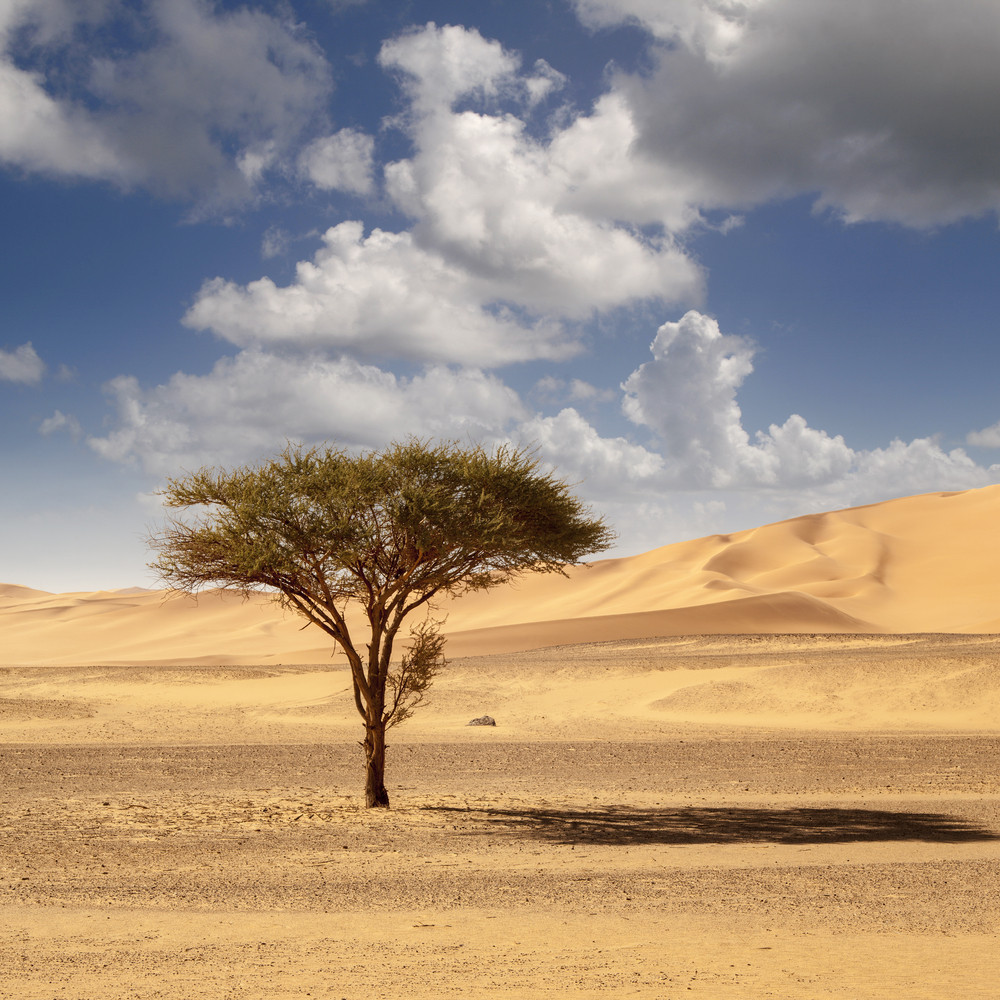 Tree growing in a sandy desert