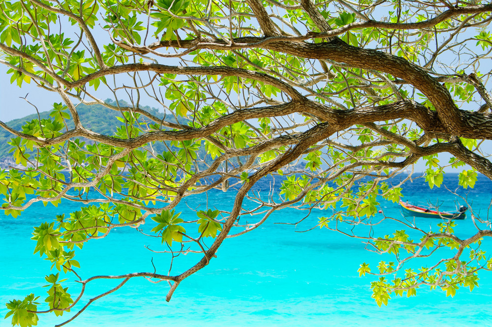 tree on beautiful blue sea in background from South Thailand, Asia
