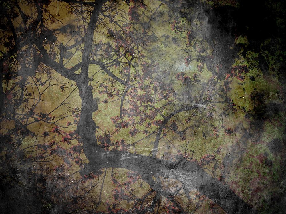 Tree Silhouette On Grunge Background