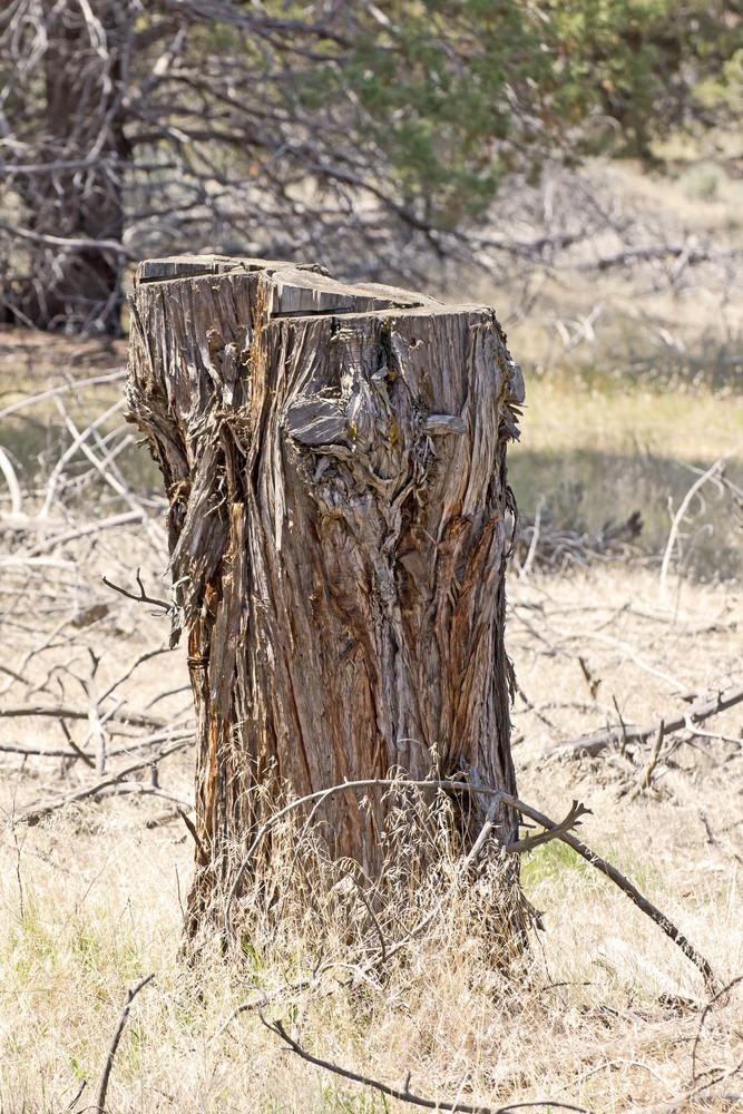 Tree Stump Picture