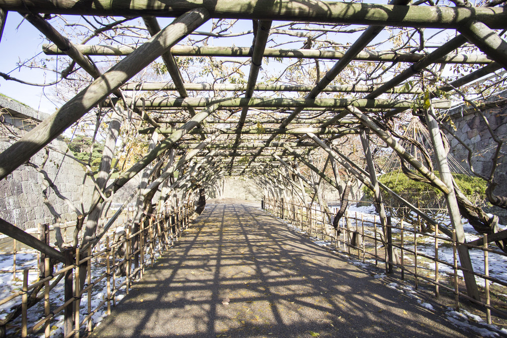 Tree tunnel at Hakodate. Japan