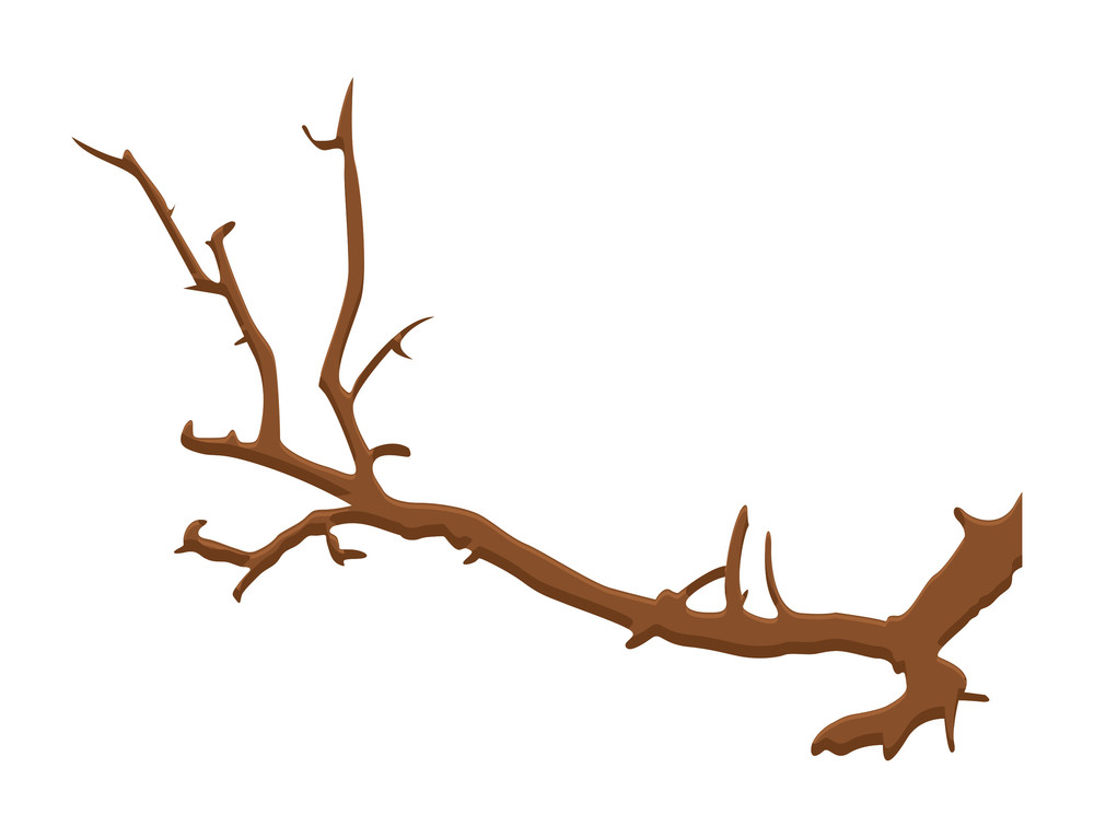 Tree Wood Branch