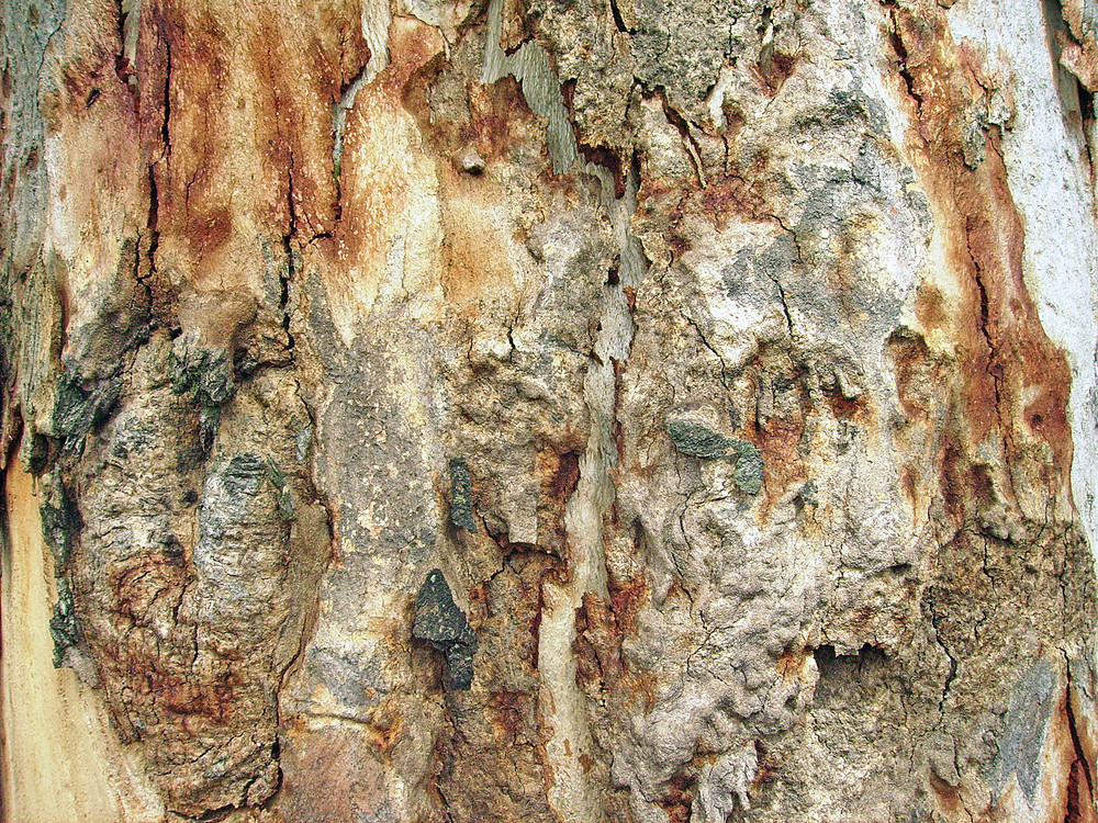 Tree_bark_background