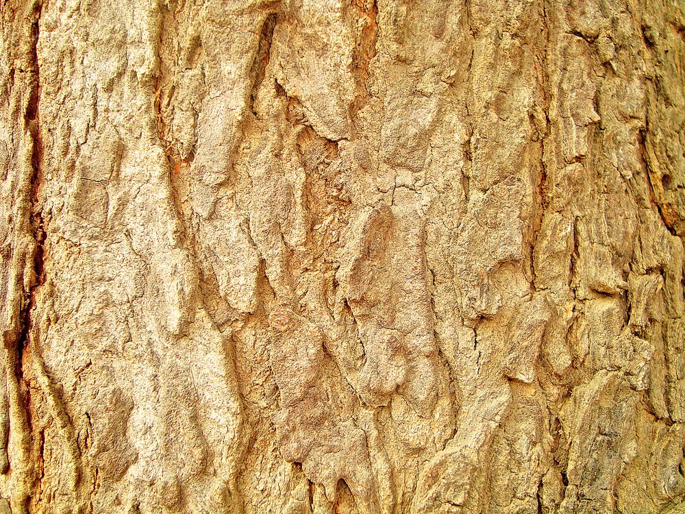 Tree_bark_wood_texture