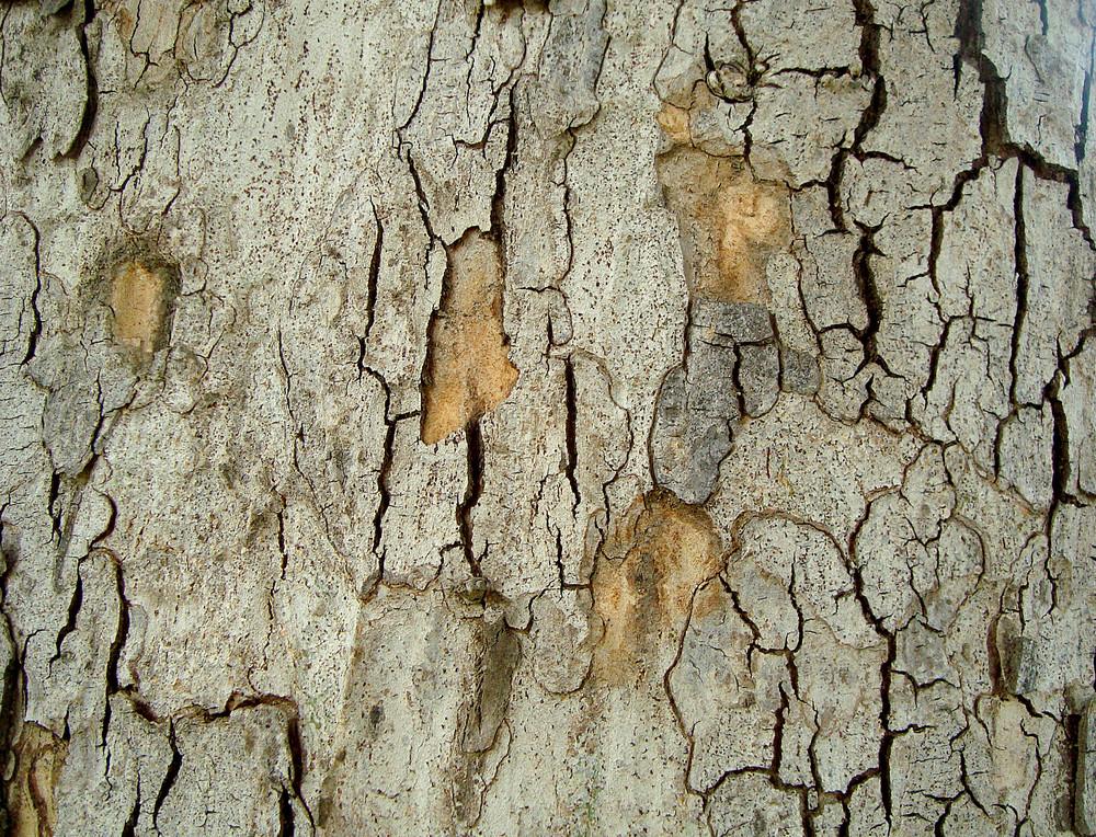 Tree_skin
