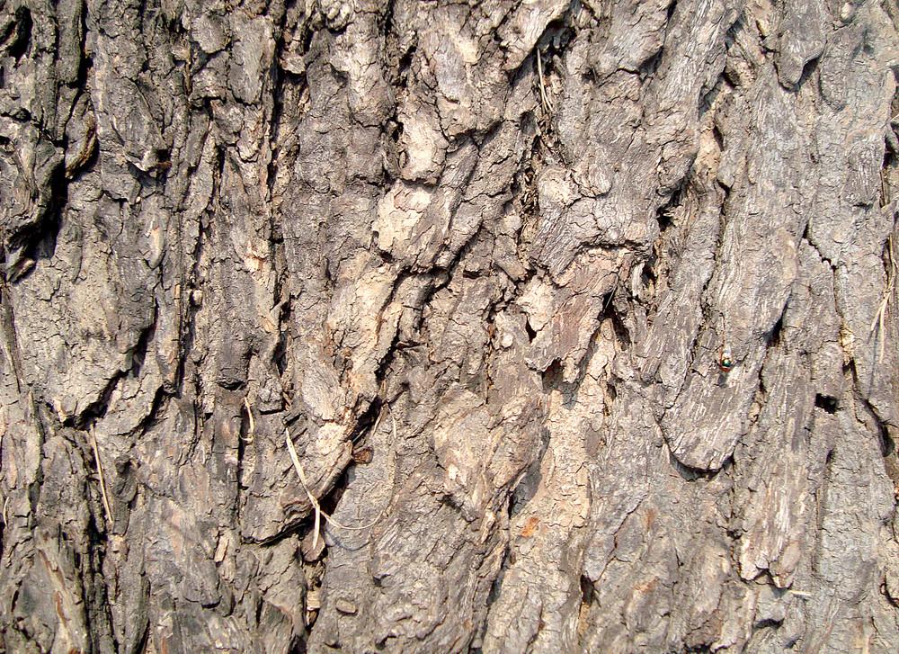 Tree_trunk_texture