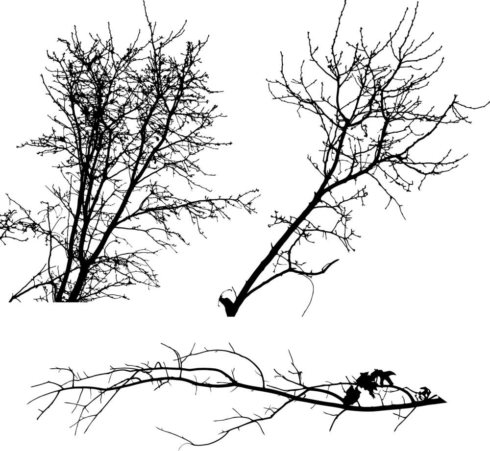 Trees 1 Vector