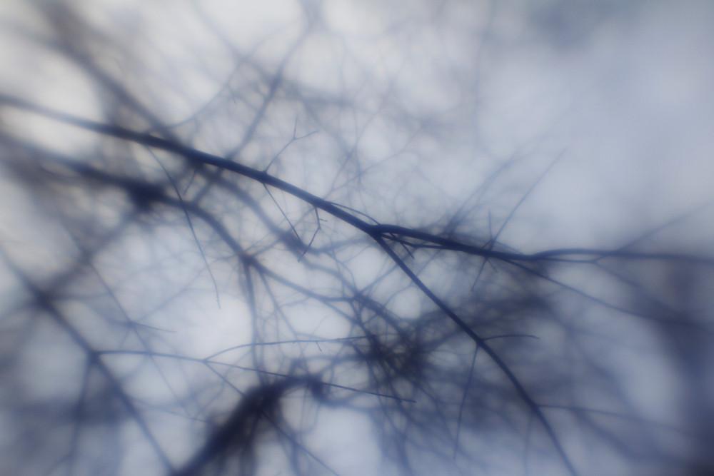 Trees 5 Texture
