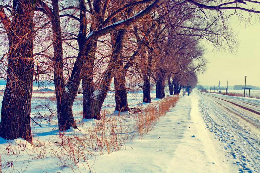 Trees along snowy winter road