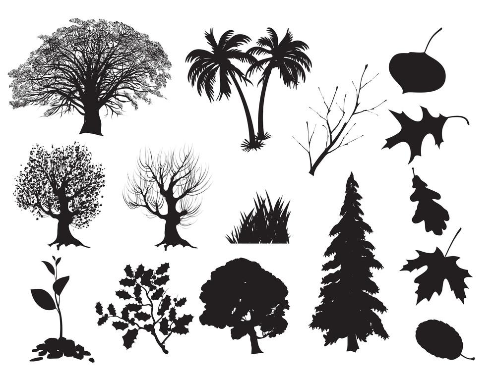 Trees. Vector.