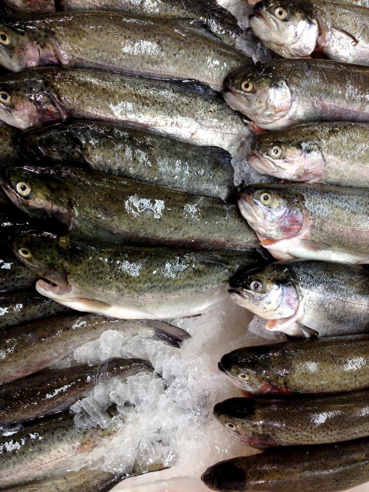 Trout. Fresh Fish On Fishmarket