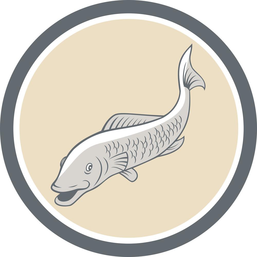 Trout Swimming Cartoon Circle