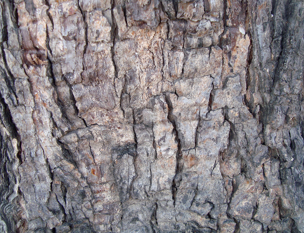 Trunk_wood_texture