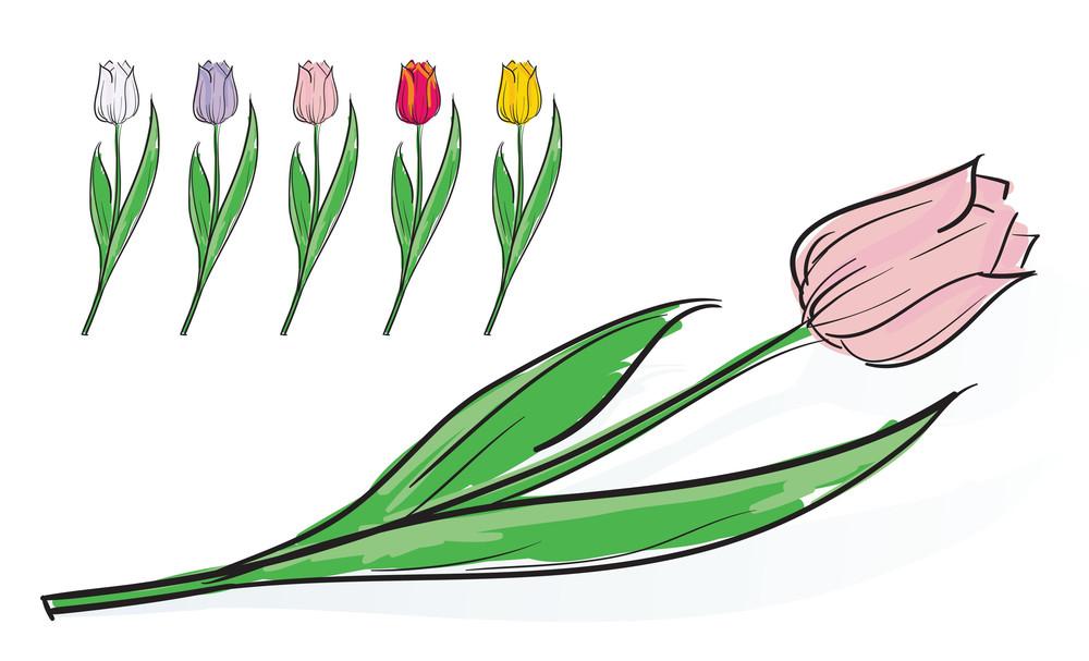 Tulips. Vector.
