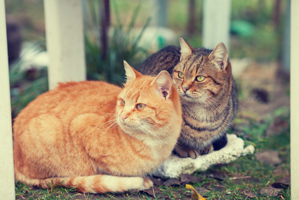 Two cats sitting outdoors Royalty,Free Stock Image