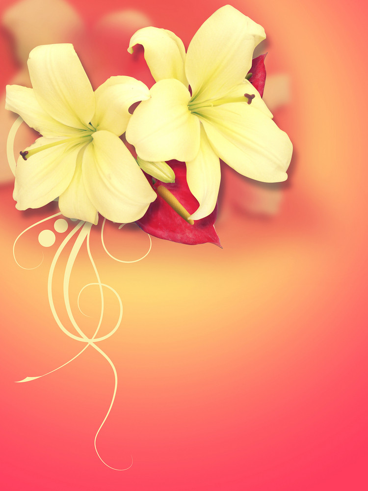 Two White Lily Flowers Background