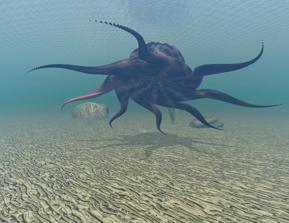 octopus-min
