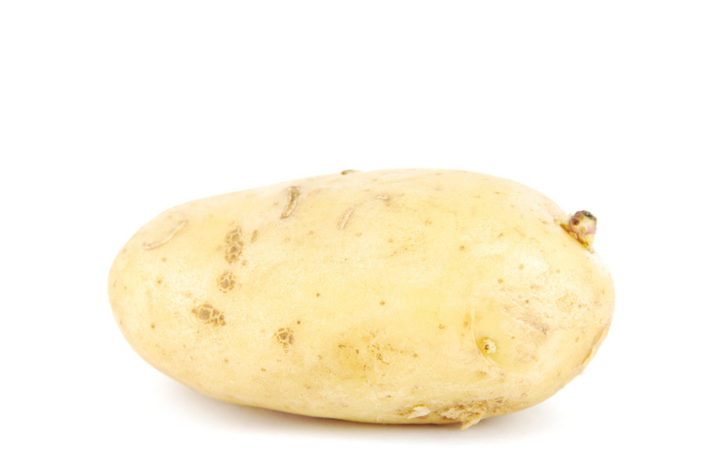 Unpeeled Yellow Potato On White