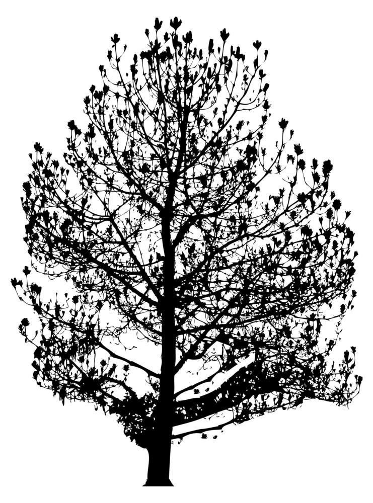 Urban Tree Vector Shape