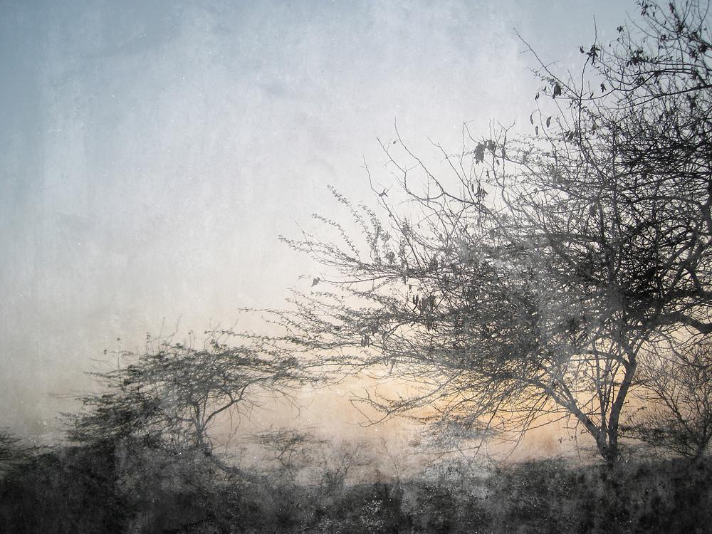 Urban Trees Background