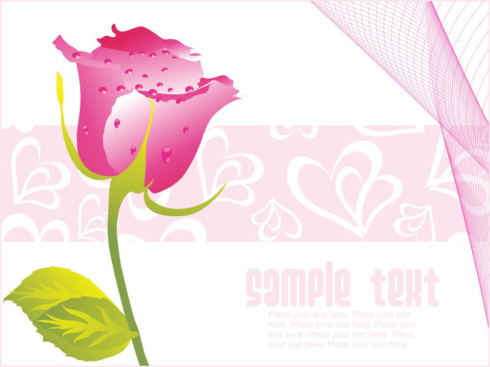 Valentine Rose Flower With Dew