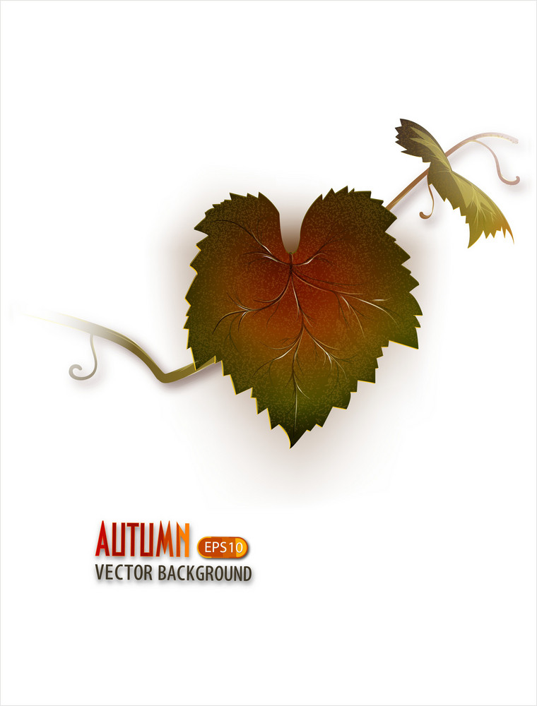 Vector Autumn Background With G rapeseed Vine