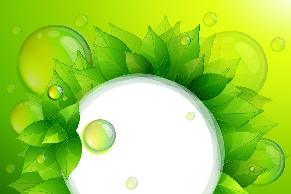 Vector Background With Green Ltaves And Clear Water Drops.