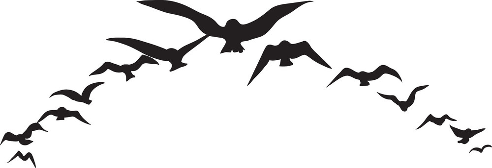 vector birds royalty free stock image storyblocks rh storyblocks com vector birds silhouette vector birds png