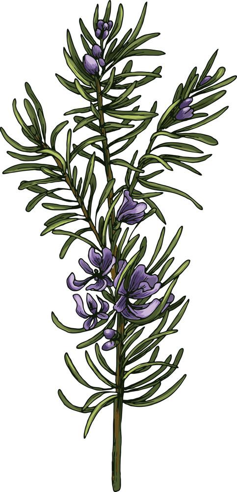 Vector Blossomed Branch