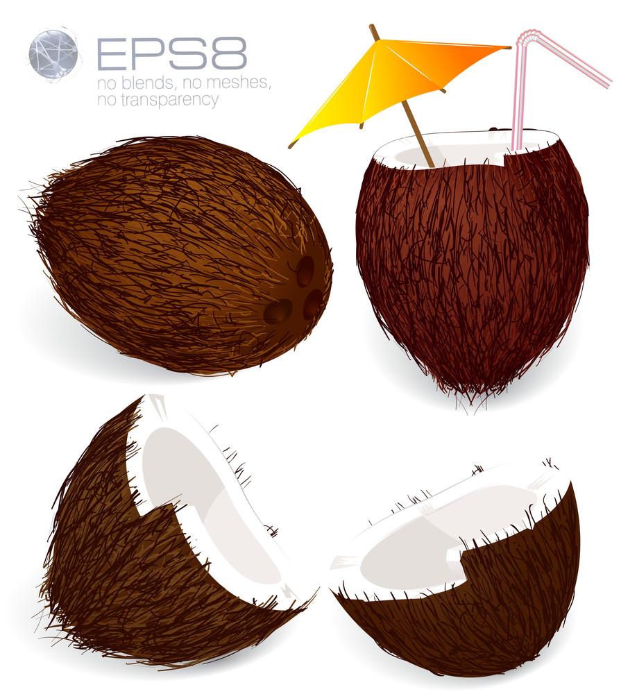 Vector Coconuts.