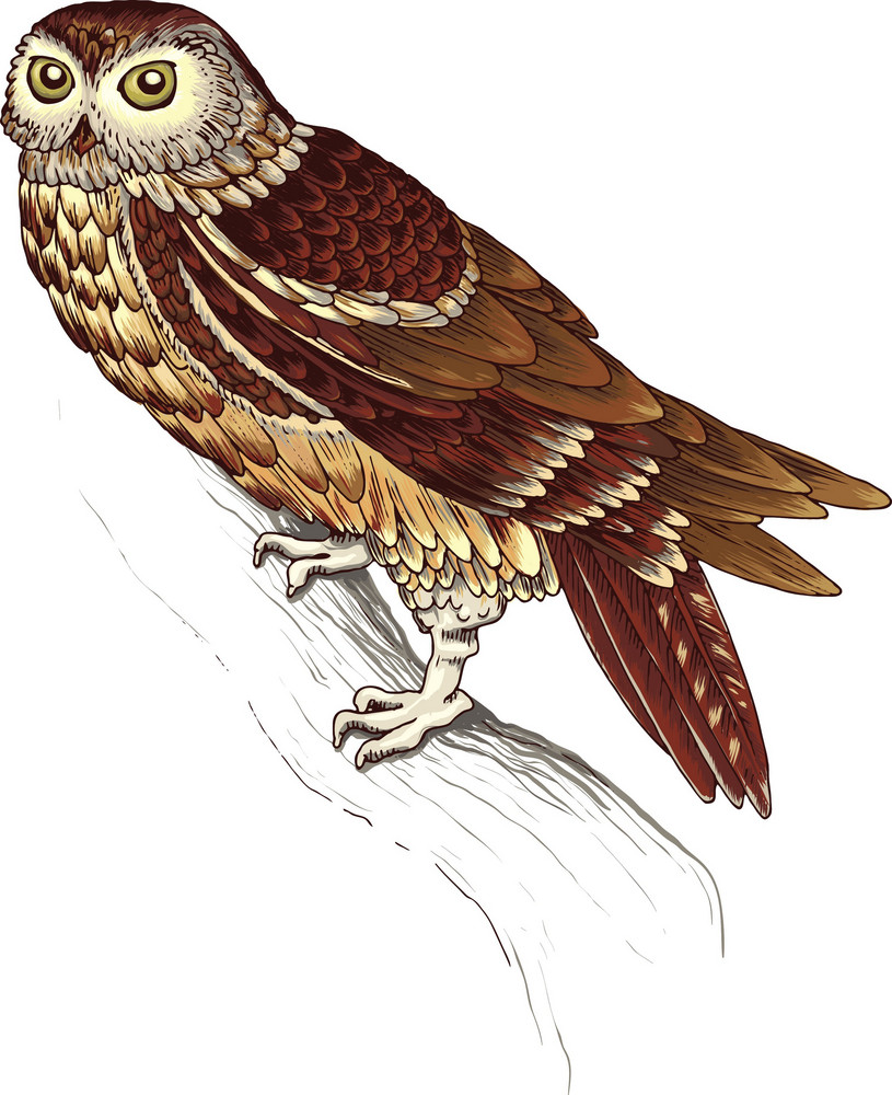 Vector Colorful Owl