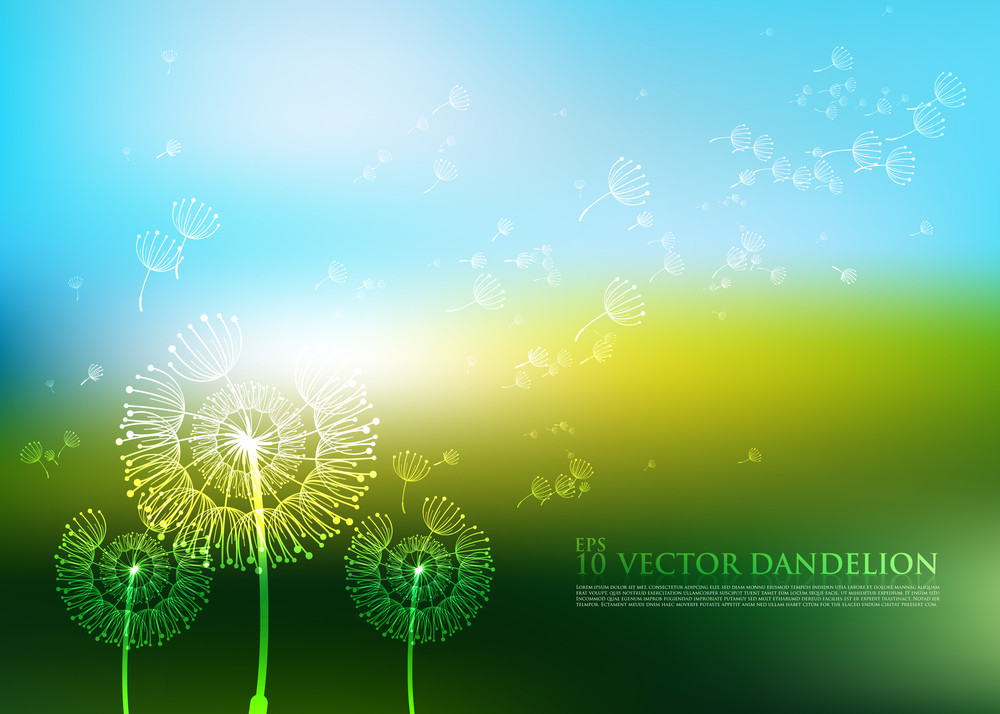 Vector Dandelion Design