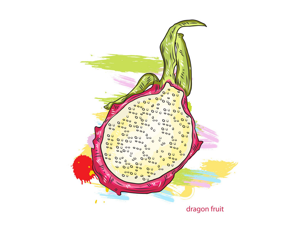 Vector Dragon Fruitwith Colorful Splashes