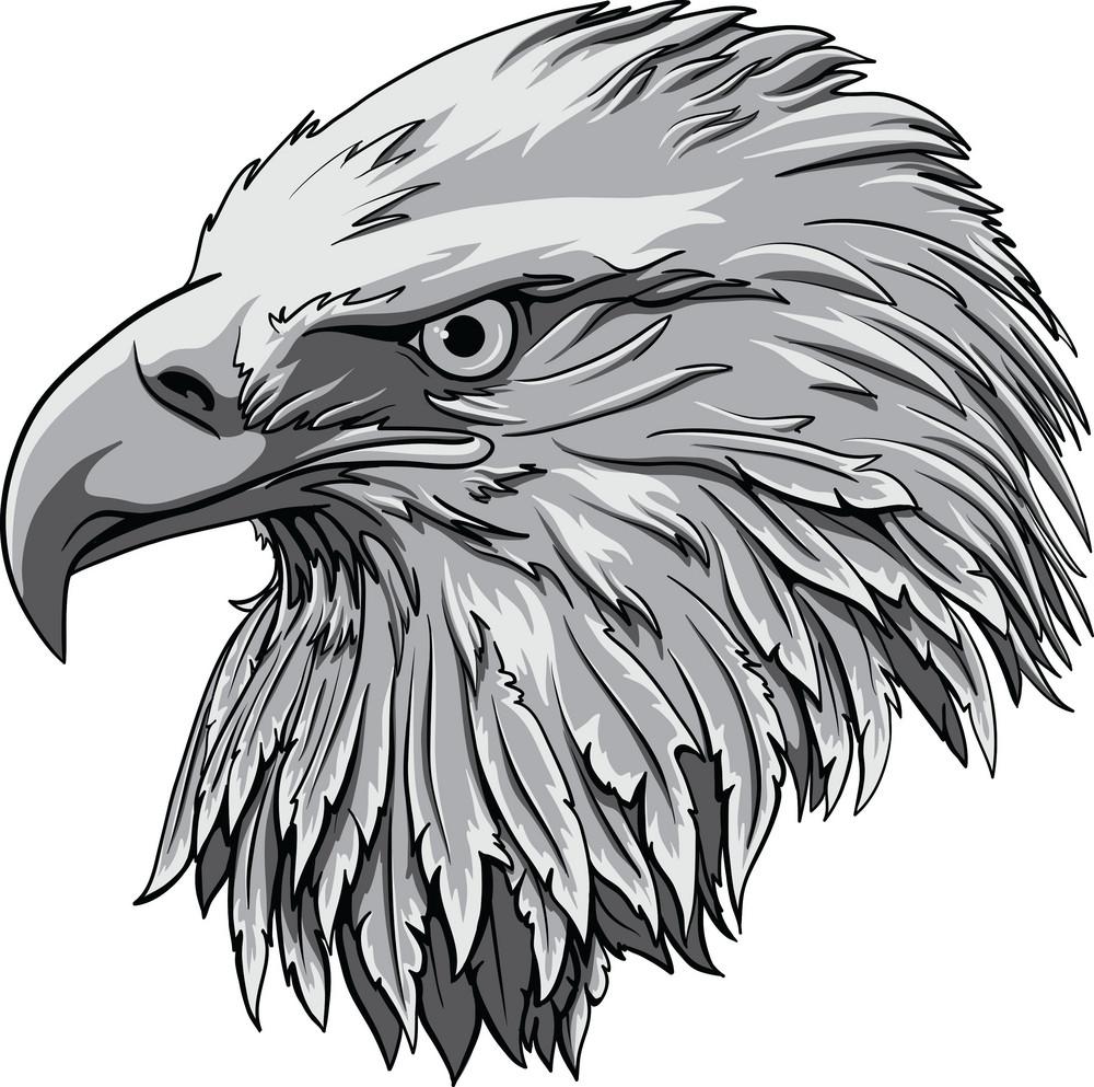 Vector Eagle