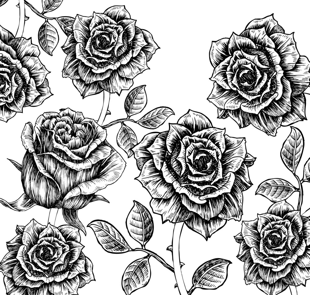 Vector Floral Background With Roses