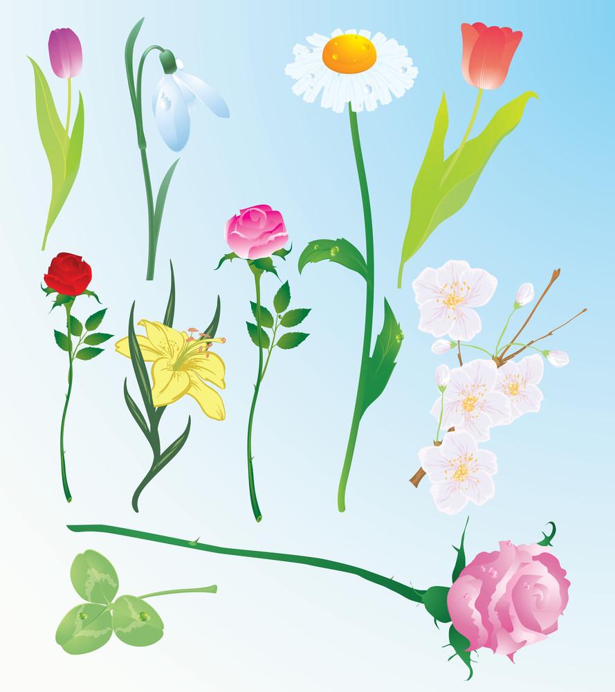 Vector Flower Set.